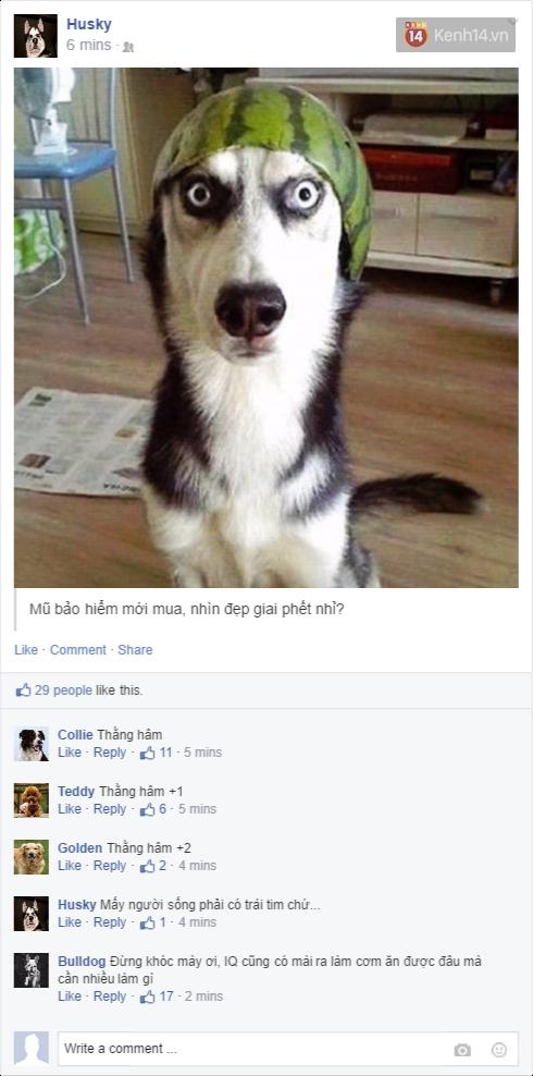 Nếu đám cún ở nhà dùng Facebook thì mọi chuyện sẽ ra sao nhỉ? - Ảnh 1.