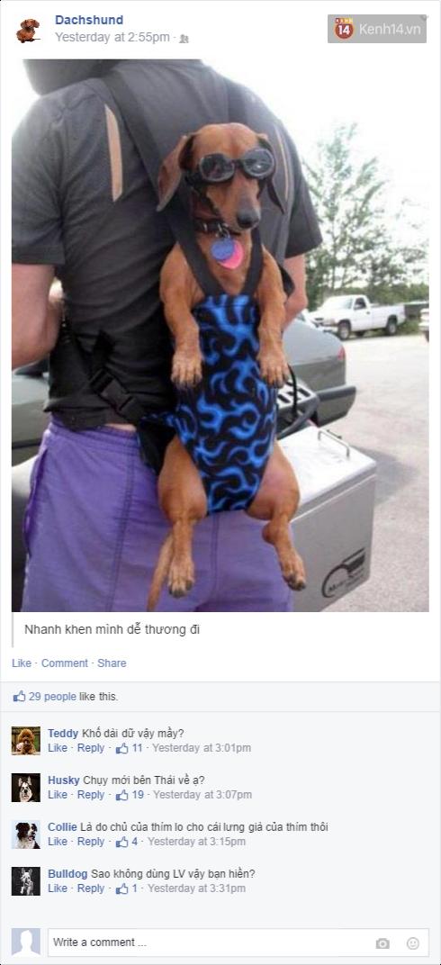 Nếu đám cún ở nhà dùng Facebook thì mọi chuyện sẽ ra sao nhỉ? - Ảnh 19.