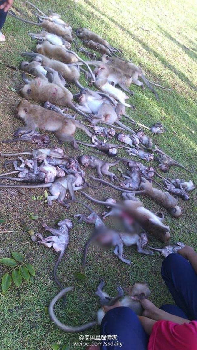 Thái Lan: Cây cổ thụ bật rễ, 52 con khỉ chết lăn lóc khi đang say ngủ - Ảnh 1.