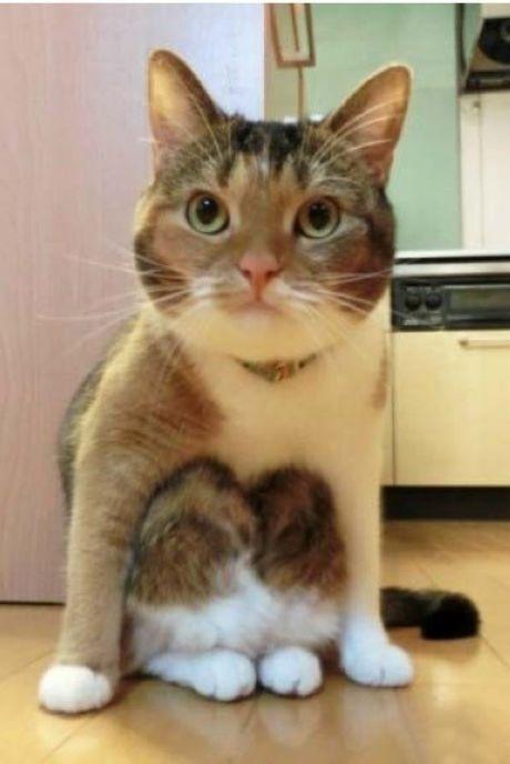 Nhìn mặt thộn của 18 em mèo ngồi xổm kiểu táo bón, không cười không lấy tiền - Ảnh 2.