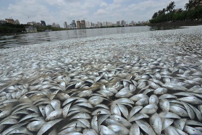 Rùng mình trước hình ảnh những dòng sông đầy rác thải và xác cá chết - Ảnh 7.