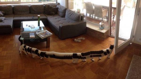 Bộ sưu tập những quả ảnh panorama về mèo lỗi đến khó hiểu - Ảnh 1.