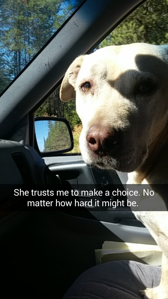 Kể cả bạn không phải là người yêu chó, khi xem hết bộ ảnh này bạn cũng sẽ bật khóc! - Ảnh 2.