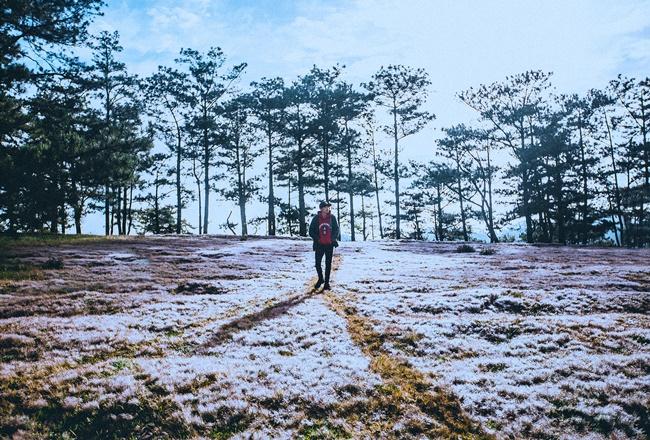 Cánh đồng tuyết đẹp đến ngỡ ngàng ở Đà Lạt - Ảnh 8.