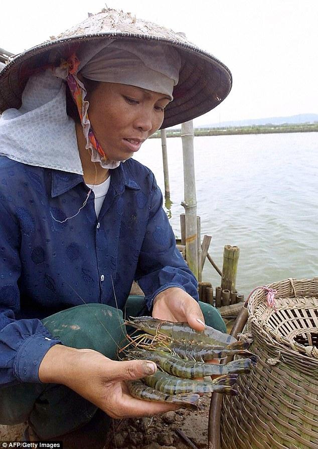 Video công nhân Việt Nam bơm thạch vào tôm bị vạch trần trên báo nước ngoài - ảnh 1