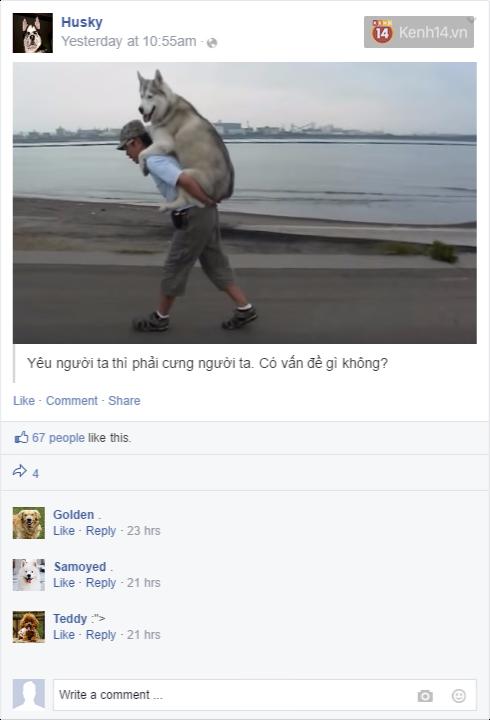 Nếu đám cún ở nhà dùng Facebook thì mọi chuyện sẽ ra sao nhỉ? - Ảnh 7.