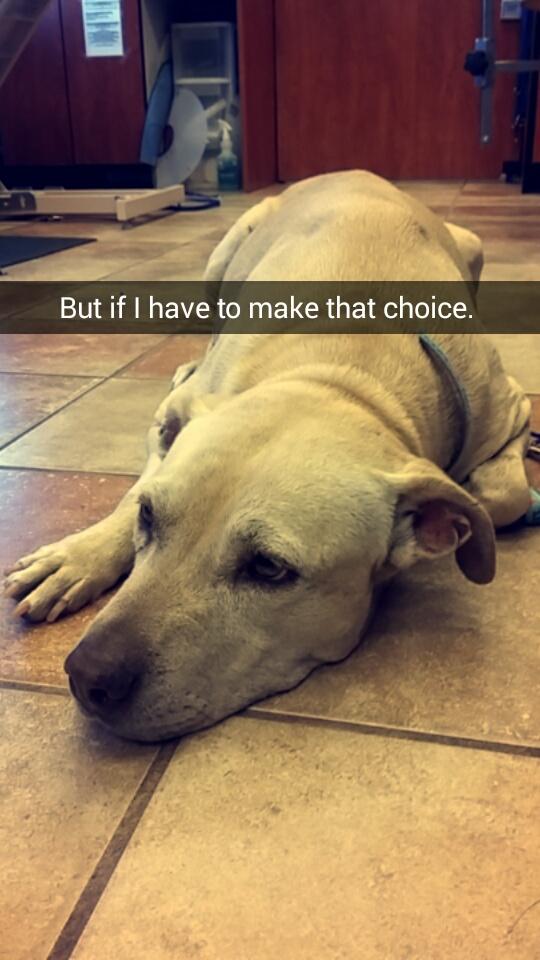 Kể cả bạn không phải là người yêu chó, khi xem hết bộ ảnh này bạn cũng sẽ bật khóc! - Ảnh 5.