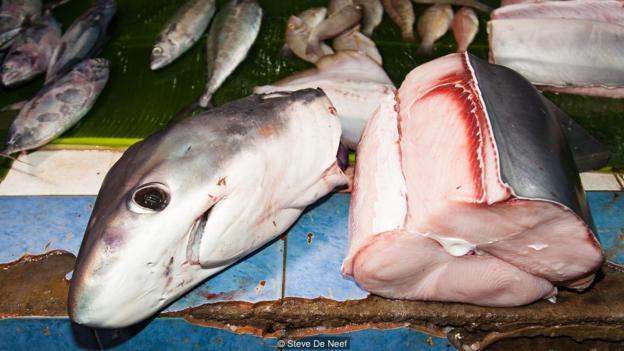 Nhờ có cá mập, đảo ngọc du lịch tại Philippines mới hồi sinh thần kì đến vậy - Ảnh 5.