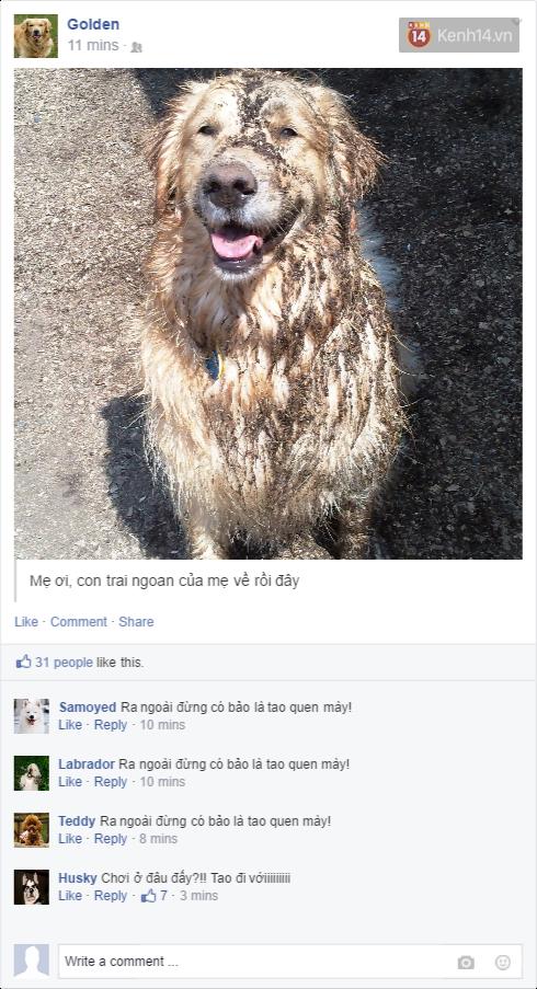 Nếu đám cún ở nhà dùng Facebook thì mọi chuyện sẽ ra sao nhỉ? - Ảnh 9.
