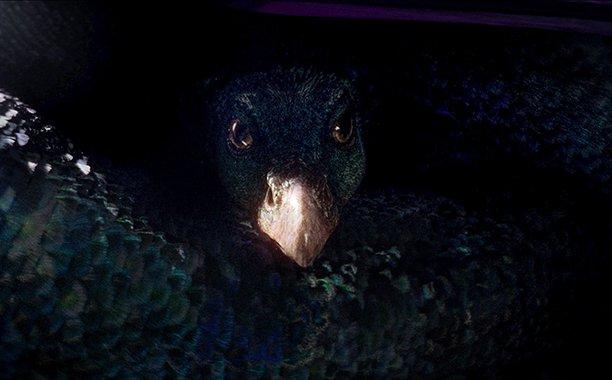 Làm quen với 6 sinh vật huyền bí bạn sẽ gặp trong Fantastic Beast and Where to Find Them - Ảnh 7.