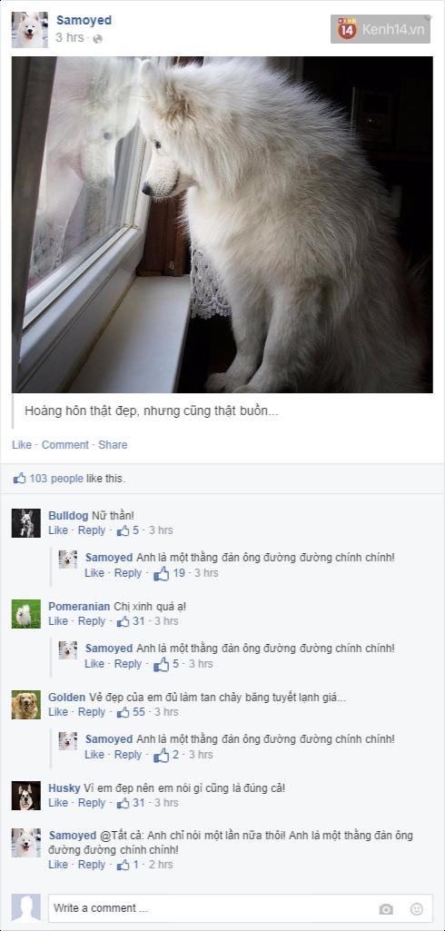Nếu đám cún ở nhà dùng Facebook thì mọi chuyện sẽ ra sao nhỉ? - Ảnh 13.