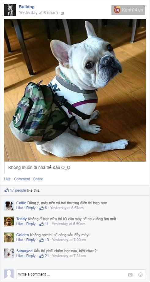 Nếu đám cún ở nhà dùng Facebook thì mọi chuyện sẽ ra sao nhỉ? - Ảnh 15.