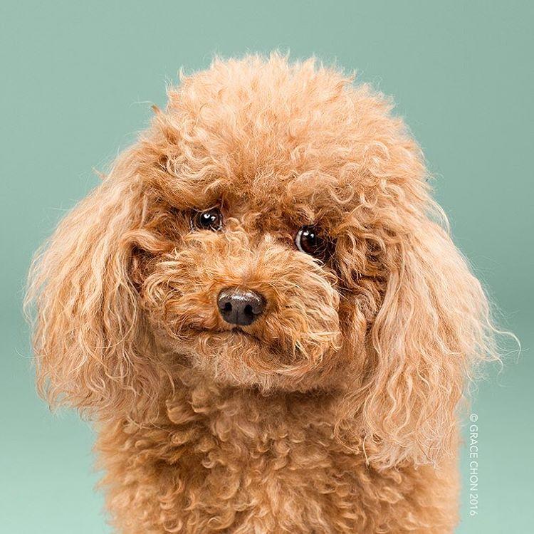 8 chú chó thật bảnh sau khi bước ra khỏi tiệm làm tóc - Ảnh 1.