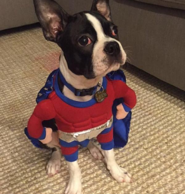 19 em chó cosplay dịp Halloween chất chơi hơn bạn nhiều - Ảnh 2.
