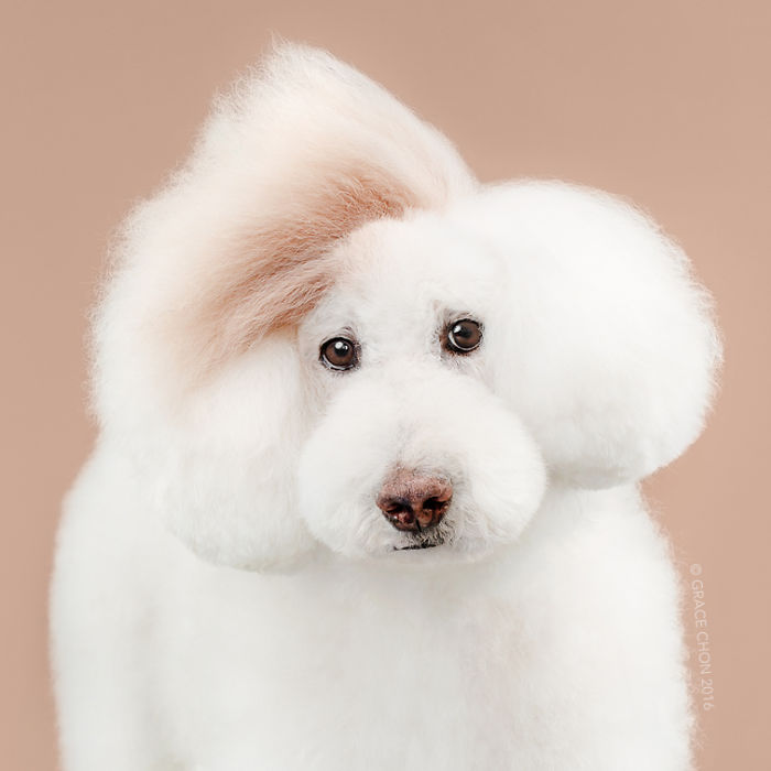 8 chú chó thật bảnh sau khi bước ra khỏi tiệm làm tóc - Ảnh 6.
