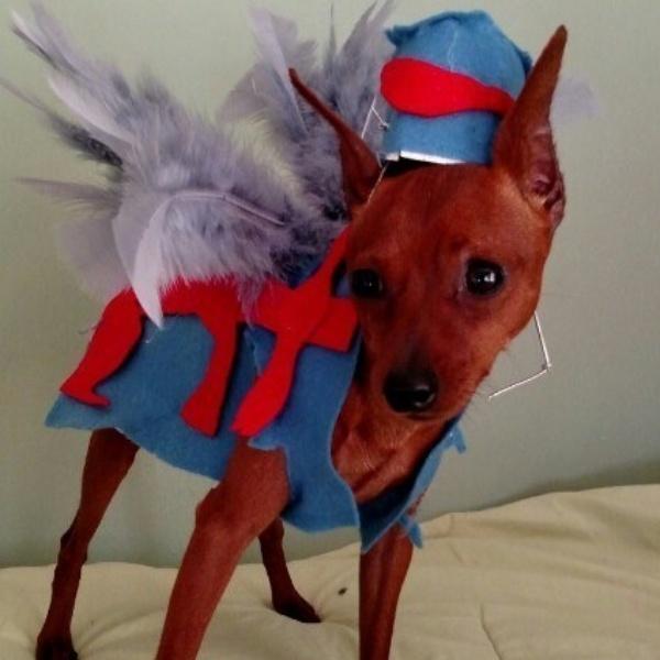 19 em chó cosplay dịp Halloween chất chơi hơn bạn nhiều - Ảnh 4.