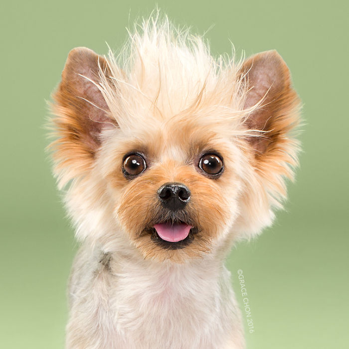 8 chú chó thật bảnh sau khi bước ra khỏi tiệm làm tóc - Ảnh 7.
