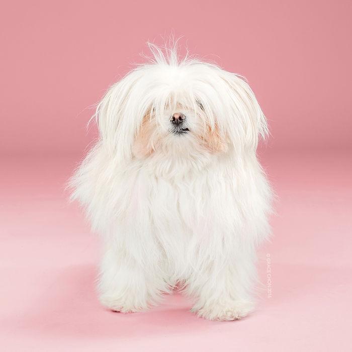 8 chú chó thật bảnh sau khi bước ra khỏi tiệm làm tóc - Ảnh 8.