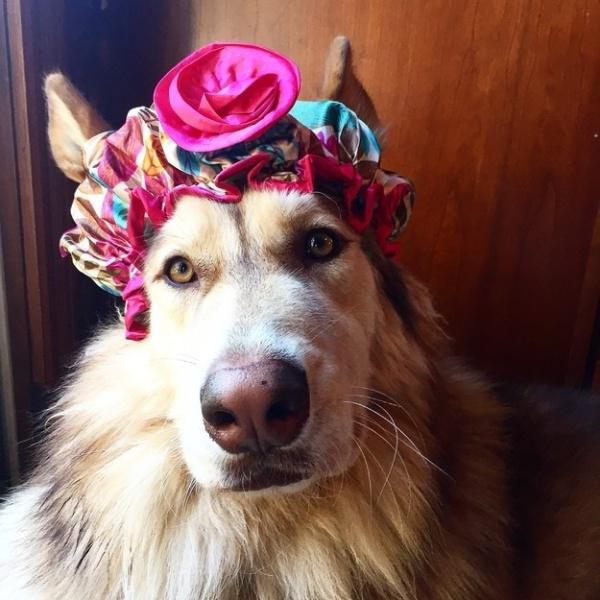 19 em chó cosplay dịp Halloween chất chơi hơn bạn nhiều - Ảnh 8.