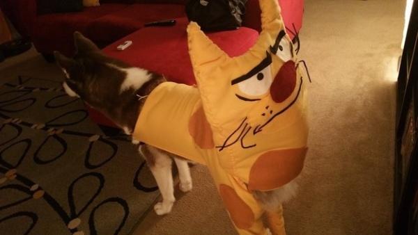 19 em chó cosplay dịp Halloween chất chơi hơn bạn nhiều - Ảnh 9.
