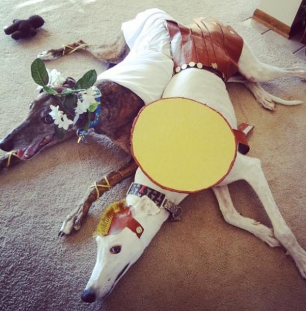 19 em chó cosplay dịp Halloween chất chơi hơn bạn nhiều - Ảnh 10.