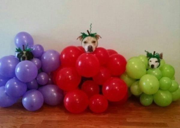 19 em chó cosplay dịp Halloween chất chơi hơn bạn nhiều - Ảnh 11.