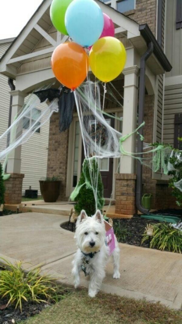 19 em chó cosplay dịp Halloween chất chơi hơn bạn nhiều - Ảnh 12.