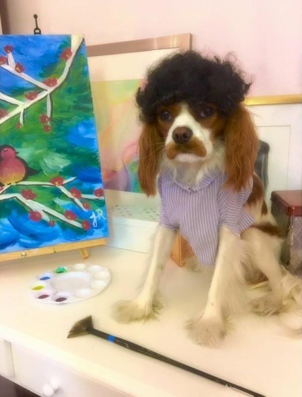 19 em chó cosplay dịp Halloween chất chơi hơn bạn nhiều - Ảnh 13.