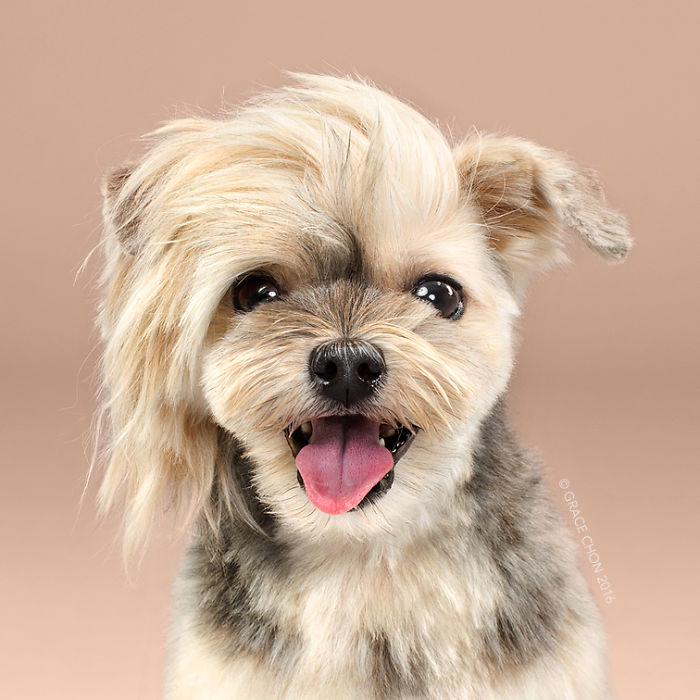 8 chú chó thật bảnh sau khi bước ra khỏi tiệm làm tóc - Ảnh 2.