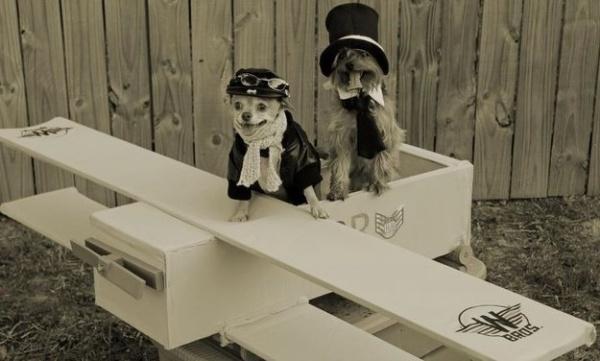 19 em chó cosplay dịp Halloween chất chơi hơn bạn nhiều - Ảnh 14.