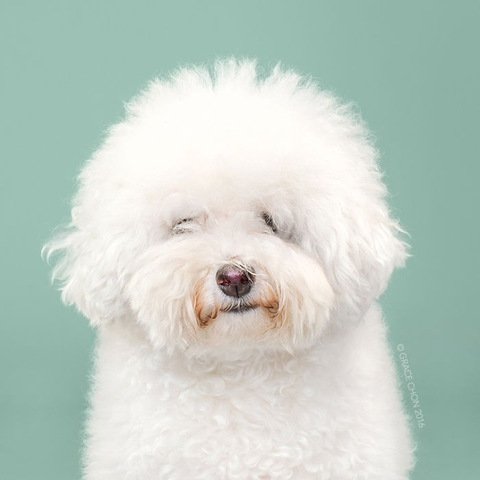 8 chú chó thật bảnh sau khi bước ra khỏi tiệm làm tóc - Ảnh 3.