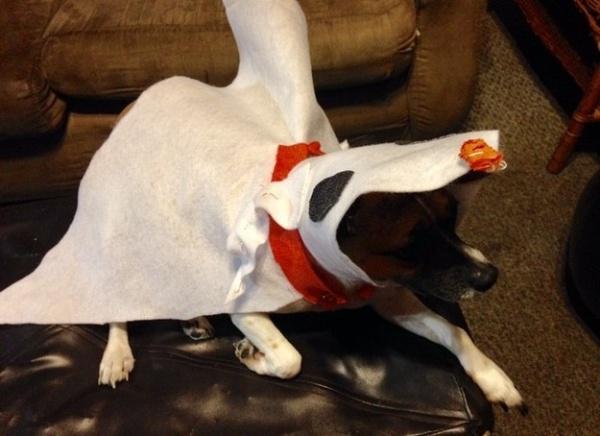 19 em chó cosplay dịp Halloween chất chơi hơn bạn nhiều - Ảnh 16.
