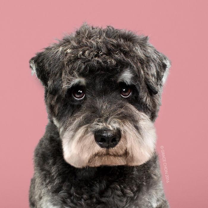 8 chú chó thật bảnh sau khi bước ra khỏi tiệm làm tóc - Ảnh 4.