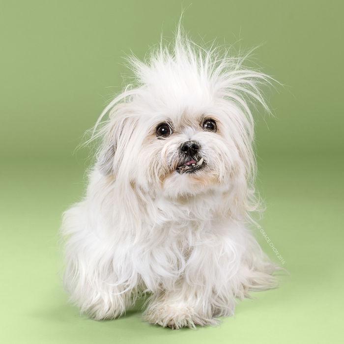 8 chú chó thật bảnh sau khi bước ra khỏi tiệm làm tóc - Ảnh 5.