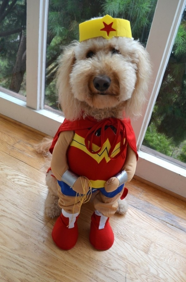 19 em chó cosplay dịp Halloween chất chơi hơn bạn nhiều - Ảnh 19.