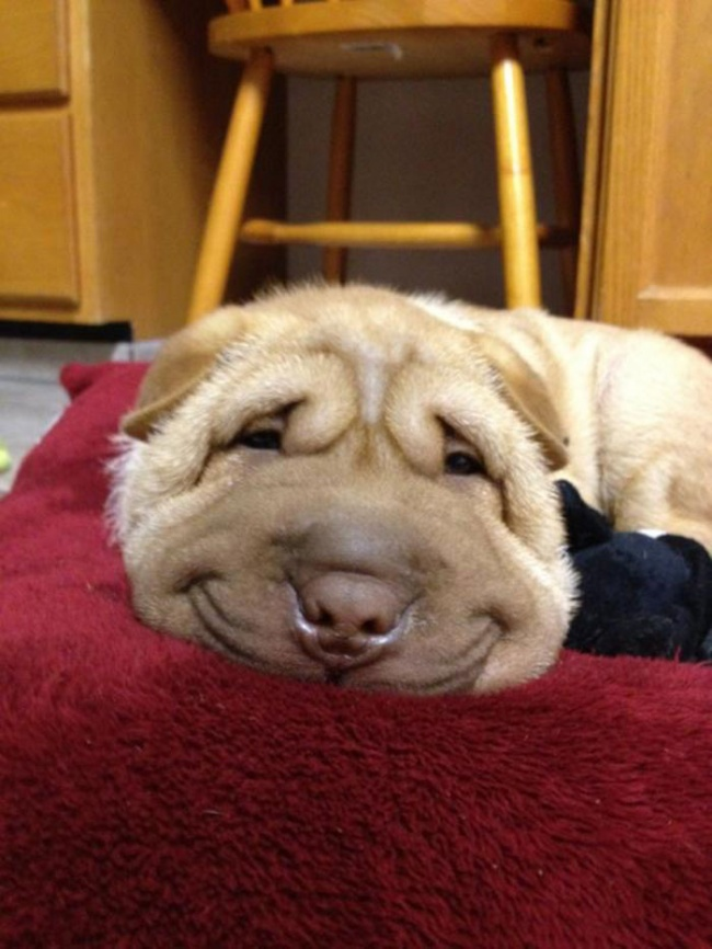 Nếu đang buồn, ngắm nụ cười của 19 em chó này sẽ quên hết ưu phiền - Ảnh 3.
