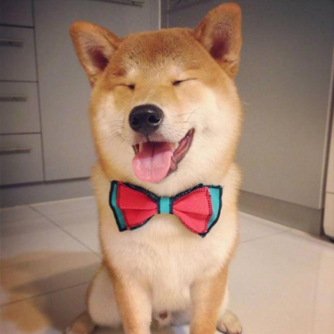 Nếu đang buồn, ngắm nụ cười của 19 em chó này sẽ quên hết ưu phiền - Ảnh 12.