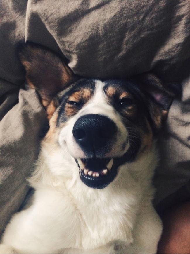 Nếu đang buồn, ngắm nụ cười của 19 em chó này sẽ quên hết ưu phiền - Ảnh 9.