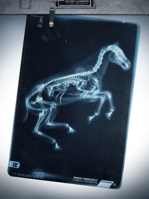 Tận mắt xem ảnh chụp Xquang bào thai của các động vật đủ khiến bạn thét lên Oh my God - Ảnh 9.