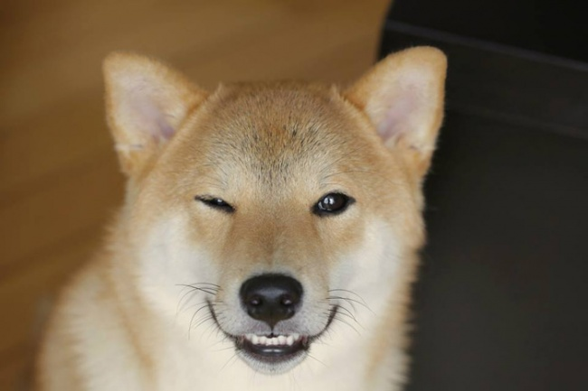 Nếu đang buồn, ngắm nụ cười của 19 em chó này sẽ quên hết ưu phiền - Ảnh 14.