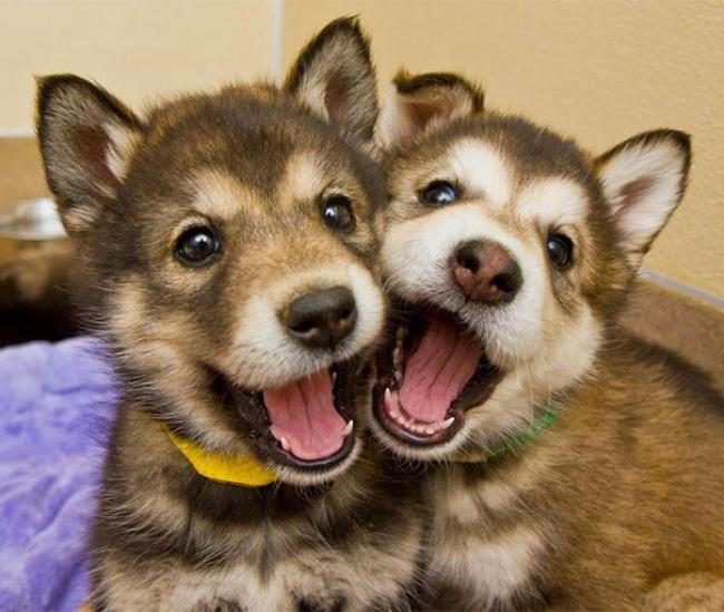 Nếu đang buồn, ngắm nụ cười của 19 em chó này sẽ quên hết ưu phiền - Ảnh 5.