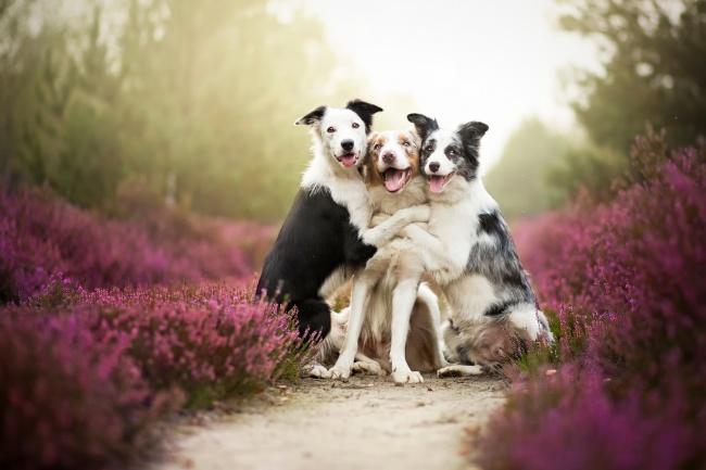 Nếu đang buồn, ngắm nụ cười của 19 em chó này sẽ quên hết ưu phiền - Ảnh 16.