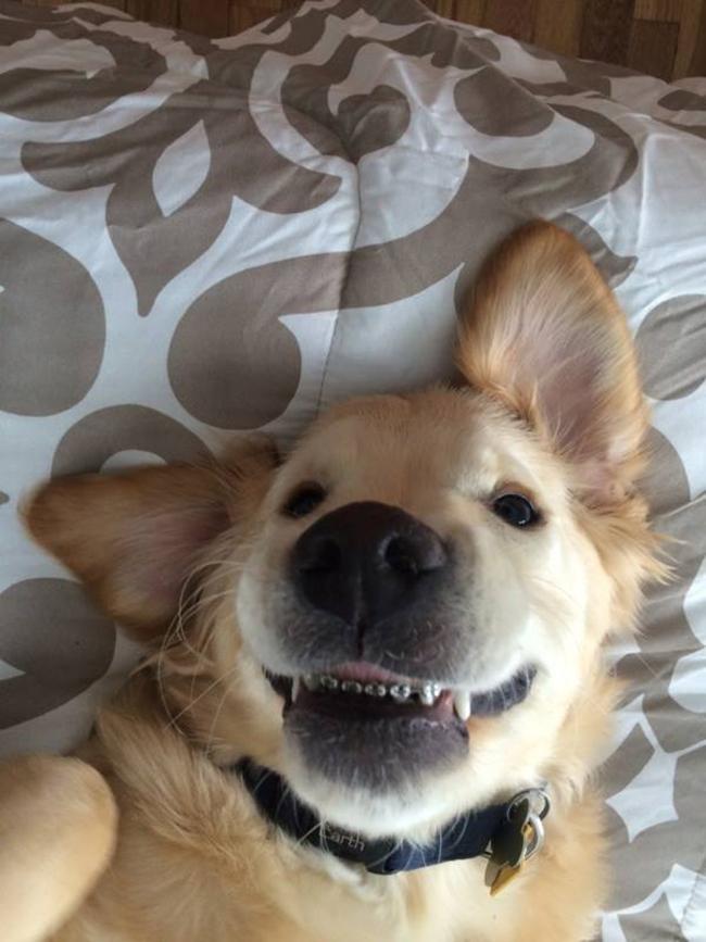 Nếu đang buồn, ngắm nụ cười của 19 em chó này sẽ quên hết ưu phiền - Ảnh 18.