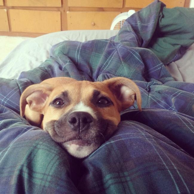 Nếu đang buồn, ngắm nụ cười của 19 em chó này sẽ quên hết ưu phiền - Ảnh 4.