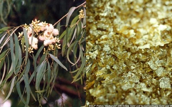 Sự thật: có một loài cây mọc ra vàng và nó có ở Việt Nam - Ảnh 4.