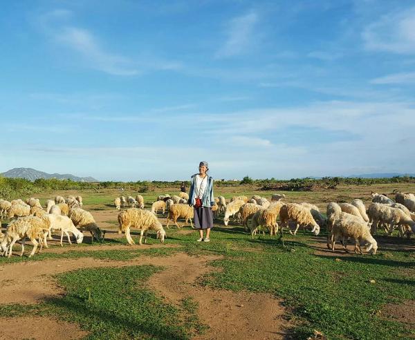 Ở Việt Nam có 3 cánh đồng nuôi cừu, tới đây ảnh có chụp kiểu gì cũng xinh! - Ảnh 5.