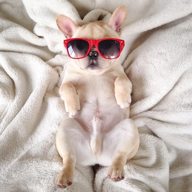 50 sắc thái đáng yêu khi ngủ của chú chó bull dễ thương nhất hệ Mặt Trời - Ảnh 7.