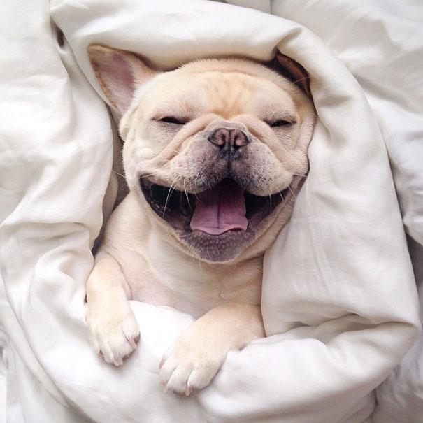 50 sắc thái đáng yêu khi ngủ của chú chó bull dễ thương nhất hệ Mặt Trời - Ảnh 6.