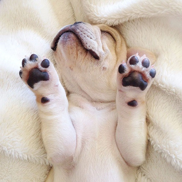 50 sắc thái đáng yêu khi ngủ của chú chó bull dễ thương nhất hệ Mặt Trời - Ảnh 8.