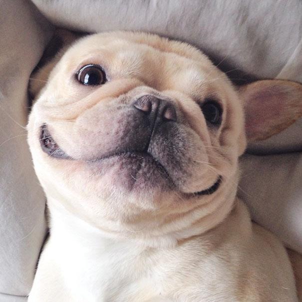 50 sắc thái đáng yêu khi ngủ của chú chó bull dễ thương nhất hệ Mặt Trời - Ảnh 9.
